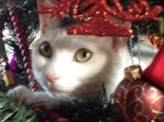 Happy Holidays from Kinsky